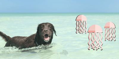 ¿Qué hacer si una agua mala le pica a tu perro?