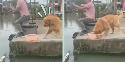 perro pez