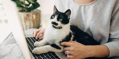 gatto-davanti-al-pc