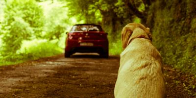 perro abandonado coche
