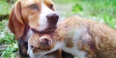cane e gatto si proteggono dal caldo africano