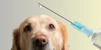 Vaccinatie met hond op achtergrond