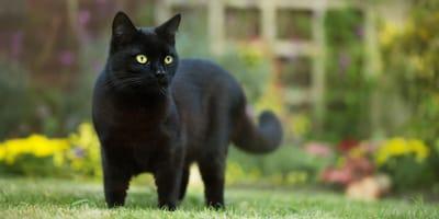 Woliera dla kota i inne systemy zabezpieczenia ogrodu