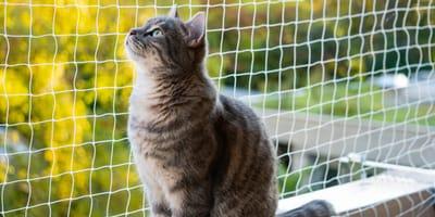Jak zabezpieczyć balkon dla kota?
