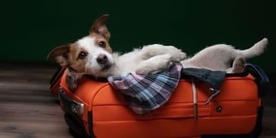 5 vantaggi di partire con il cane in vacanza