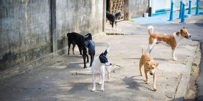 Perros comunitarios en las calles de Chile