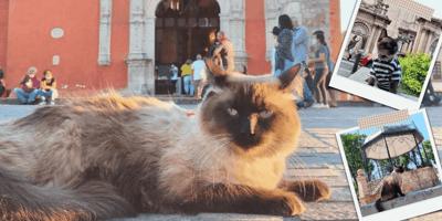 gato bodoque en la calle