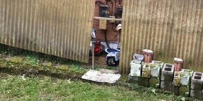 Vrijwilliger vindt achtergelaten kattenbench: wat hij erin aantreft, maakt hem razend