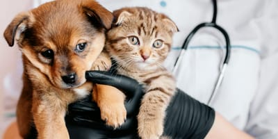 Hundewelpe und Katzenbaby auf Arm von Tierarzt
