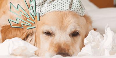 ¿Qué medicina le puedo dar a mi perro para el dolor?