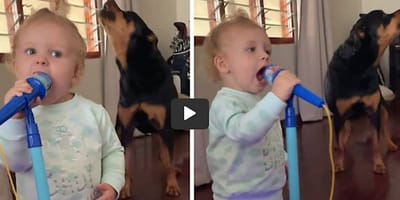 bebe y rottweiler cantando