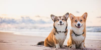 The best dog friendly beaches in the UK