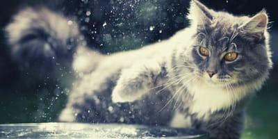 Perché il gatto gioca con l'acqua?