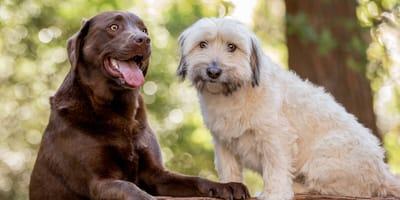 Aparte hondennamen: een inspirerende lijst vol aparte namen