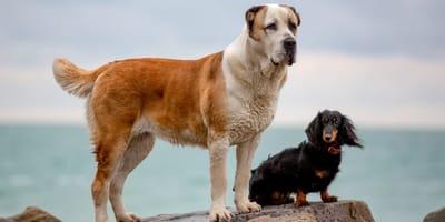 Krachtige hondennamen: 18 krachtige en stijlvolle namen