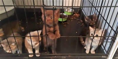 <p>Naast volwassen honden en katten werden 2 puppies en 18 kittens aangetroffen.</p>