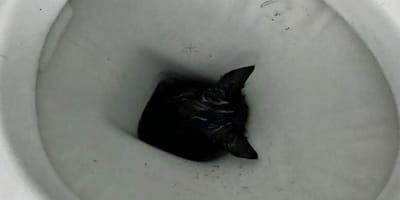 Die Schreie kommen aus dem Bad