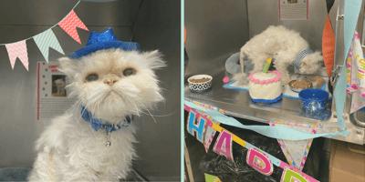 gato cumpleaños refugio