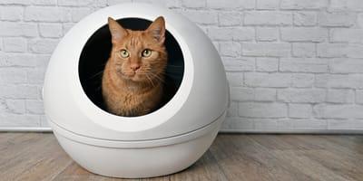 Zapalenie pęcherza u kota – objawy, przyczyny i leczenie