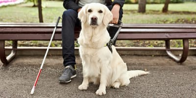 Loyal guide dog never let his blind owner know he was losing sight