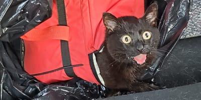 Katze bei 40°C in Plastiktüte ausgesetzt: Mit diesem Retter hat sie nicht gerechnet!