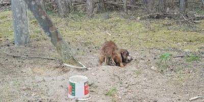 Stworzenie porzucone w lesie: kiedy ratownicy widzą w jakim jest stanie, nie mogą powstrzymać łez