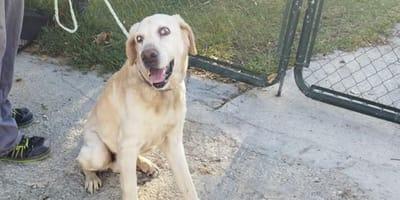 perro de 12 años abandonado en cadiz