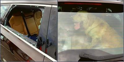 Ingeslagen autoruit met hond achter raam