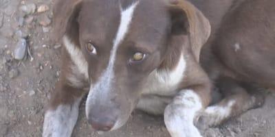 Herrchen in Mine gestorben: Hund rührt Menschen zu Tränen