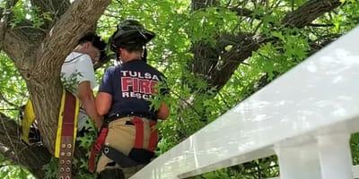 Wszedł na drzewo, by uratować kota. Finał tej historii sprawił, że strażacy popłakali się ze śmiechu