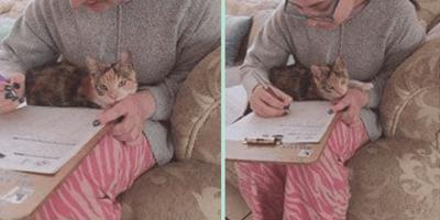 gatita abandonada encuentra un nuevo hogar