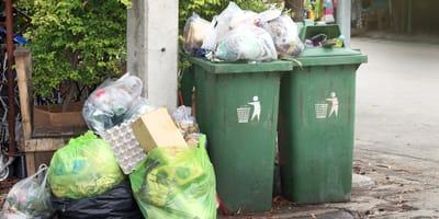 Z pełnego śmieci kontenera dochodzą piski. W stosie odpadków rozgrywa się dramat