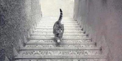 Katzenfoto auf der Treppe bringt das Internet zum Durchdrehen