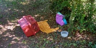 Cólera en el refugio: los voluntarios encuentran un transportín para gatos y al abrirlo cunde el pánico