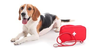 Co powinnna zawierać apteczka dla psa?