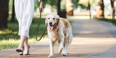When is it too hot to walk your dog?