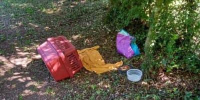 Wut im Tierheim: Großes Entsetzen, als sie den Katzenkorb öffnen