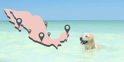 ¿A qué playas puedo llevar a mi perro en México?