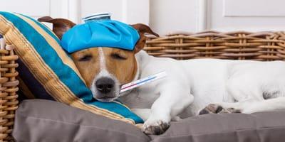 Gripe en perros: síntomas, causas, tratamiento y remedios caseros