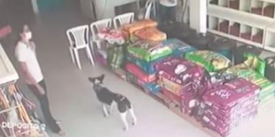 Veterinario vede un cane entrare in clinica: servono cure immediate (Video)