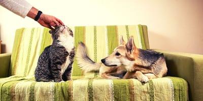 Come riconoscere un cane geloso? E cosa fare?