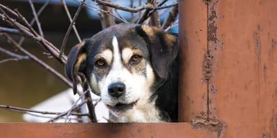 Non-profit die hondjes uit Roemenië redt blijkt alles behalve goed doel!