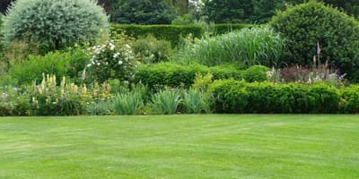 He takes a look in his neighbour's garden and laughs when he sees what is on the lawn