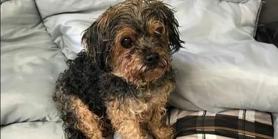 Trova il suo cane smarrito, ma il calvario non è finito