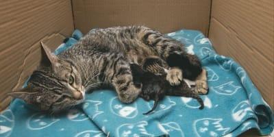 Gata en Rusia tiene bebés, ¡pero no son gatitos!