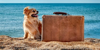 Cosa mettere nella valigia del cane? Gli indispensabili
