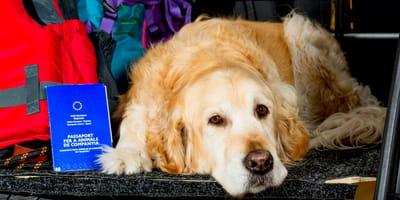 Passaporto per cani: richiederlo, tempi, costi e rinnovo