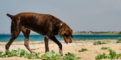 Udar cieplny u psa - objawy, leczenie, pierwsza pomoc