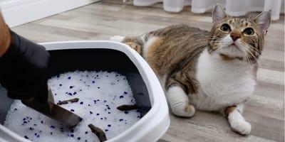 De kattenbak schoonmaken: alles wat je moet weten