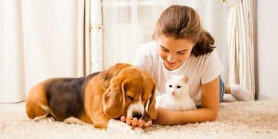Kot w domu. Pies w domu, czyli jak być kochającym i odpowiedzialnym opiekunem czworonoga
